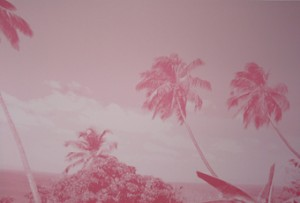 Pink Palm, 2012, 180x270