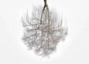 Tree Crowns 01