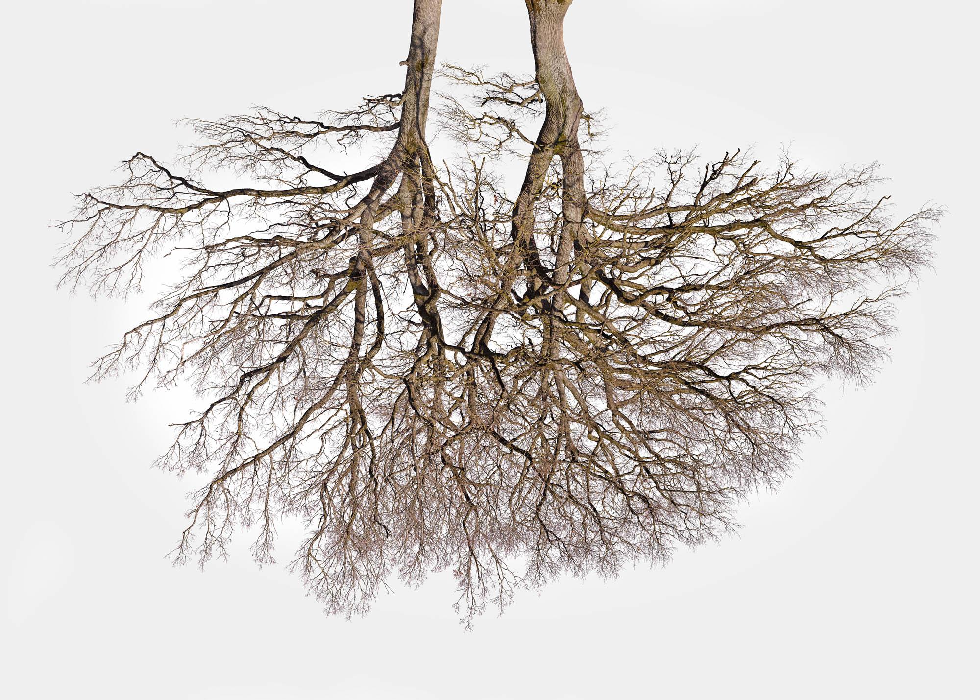 Tree Crowns 04